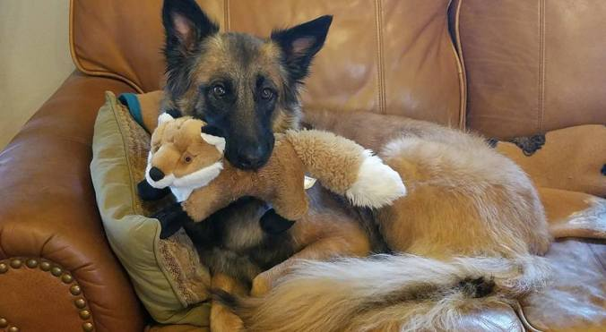 korda and her fox