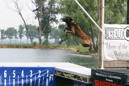 blog gator dock diving