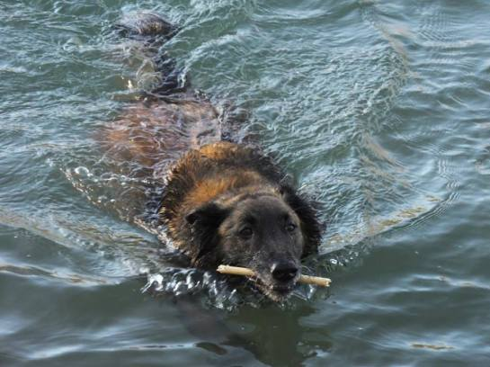 kylie blog swim