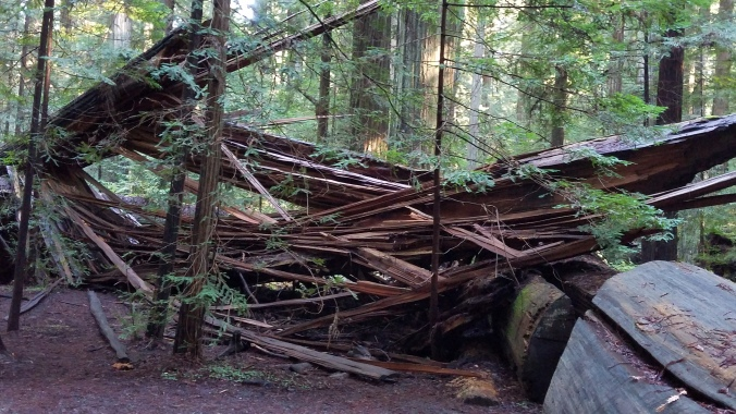 avenue of the giants18
