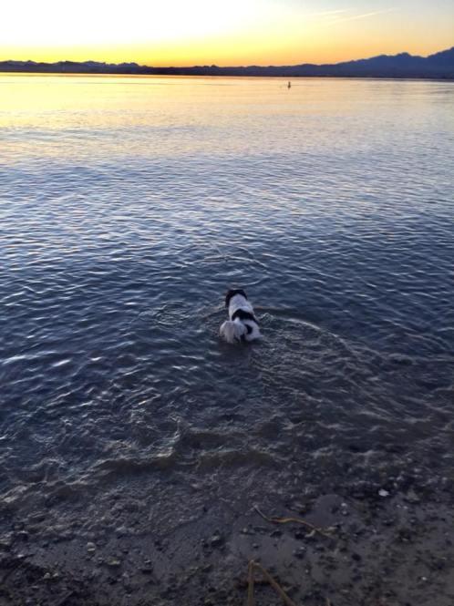 dog beach lake havasu