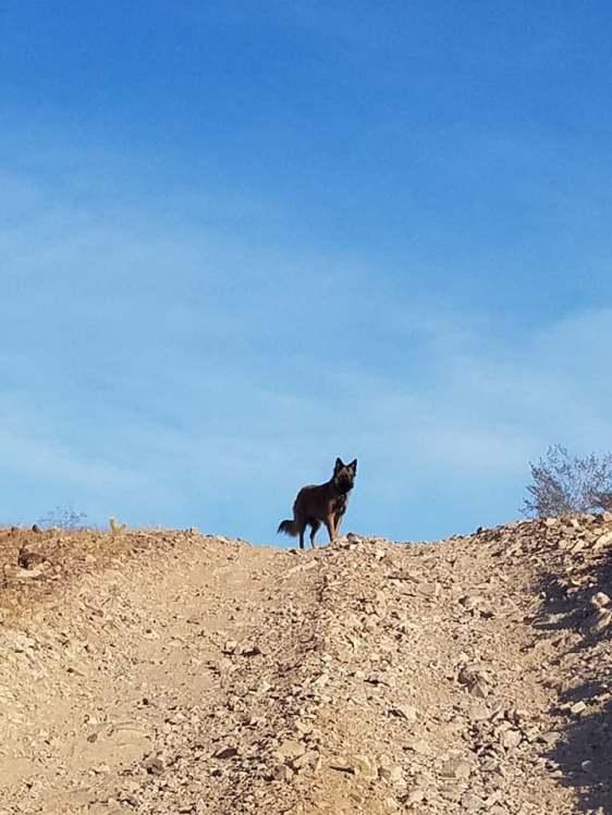 Q Korda hiking