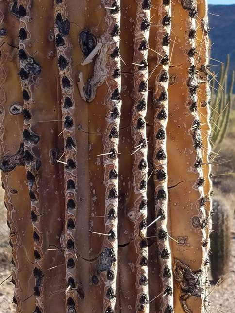 favorite organ pipe pics 13