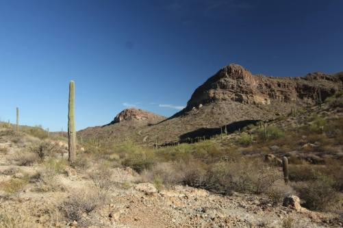 favorite organ pipe pics 3