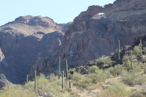 favorite organ pipe pics 5