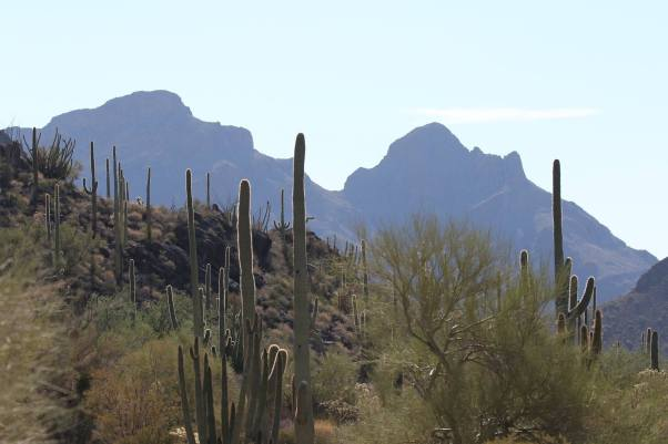favorite organ pipe pics 7