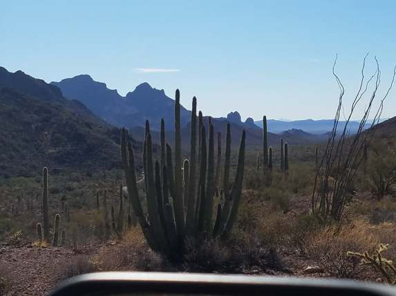 favorite organ pipe pics 8