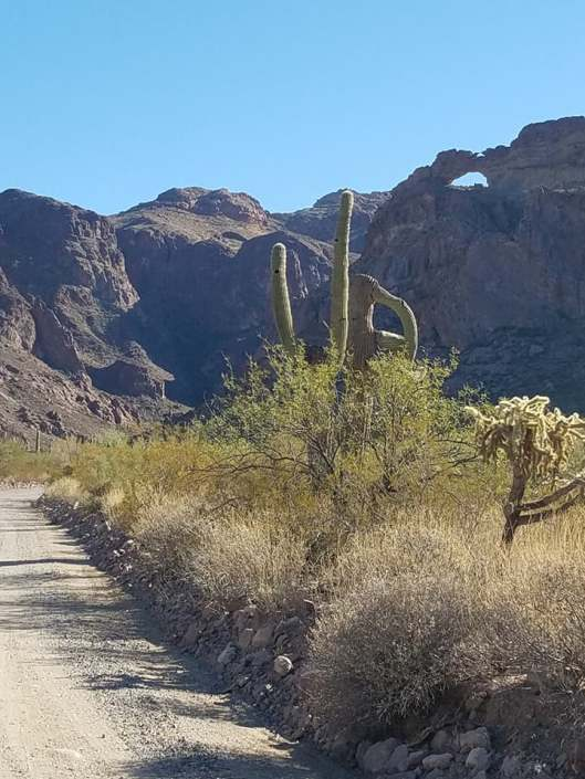favorite organ pipe pics 9