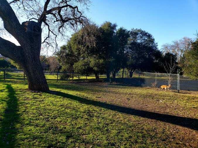 lake cachuma dog park 1